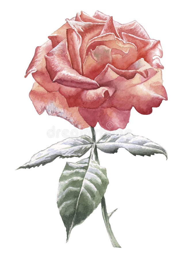 A ilustração com vermelho levantou-se ilustração royalty free