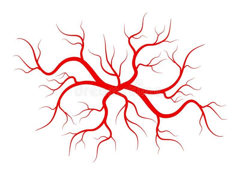 Ilustração criativa do vetor das veias vermelhas isoladas no fundo Embarcação humana, artérias da saúde, projeto da arte Sumário ilustração stock