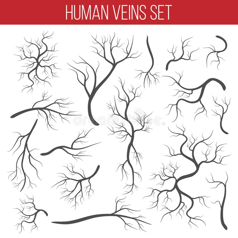 Ilustração criativa do vetor das veias vermelhas isoladas no fundo Embarcação humana, artérias da saúde, projeto da arte Sumário ilustração do vetor
