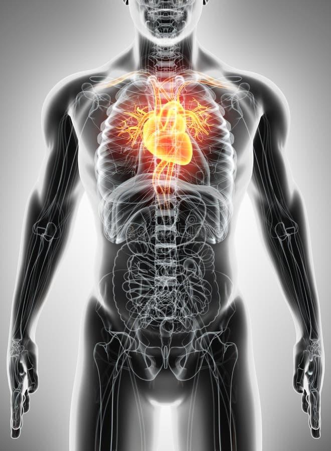 ilustração 3D do coração, conceito médico ilustração do vetor