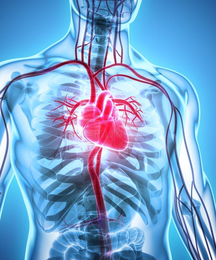 ilustração 3D do coração, conceito médico ilustração stock