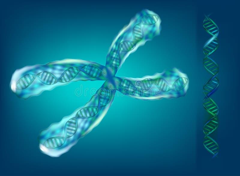 ilustração 3d dos cromossomas genetics ilustração do vetor