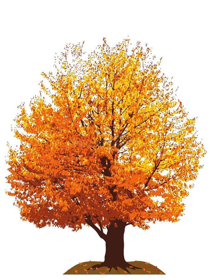 Ilustração da árvore de cereja do outono ilustração stock