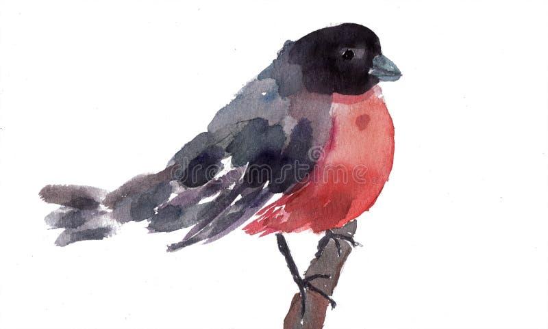 Ilustração da aguarela do Bullfinch ilustração stock