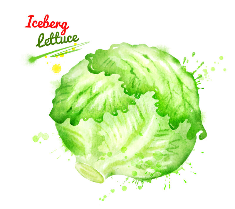 Ilustração da aquarela da alface de iceberg ilustração stock