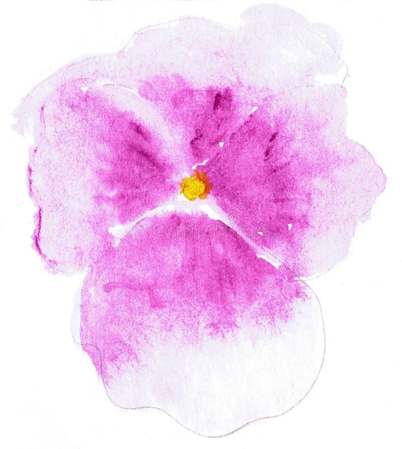 Ilustração da aquarela da flor estilizado do amor perfeito Ilustração de cor das flores em pinturas da aguarela ilustração stock