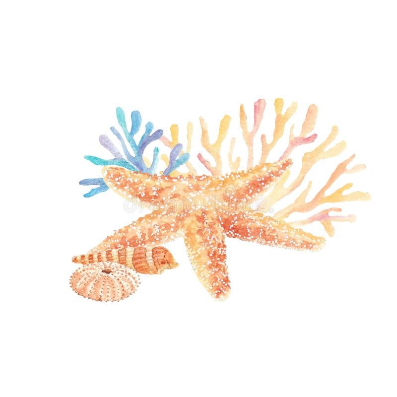 Ilustração da aquarela das conchas do mar e da estrela do mar com alga foto de stock royalty free