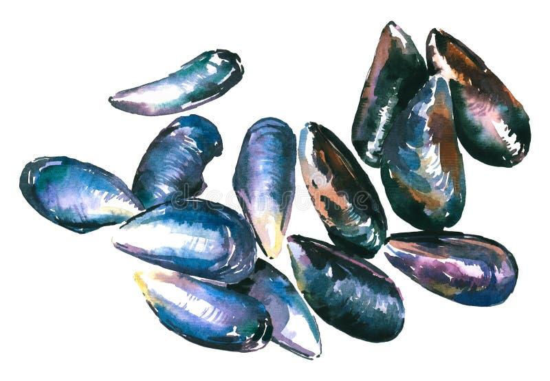 Ilustração da aquarela de moluscos do mar dos escudos ilustração stock