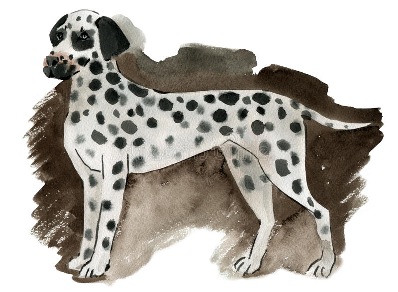 Ilustração da aquarela de um Dalmatian do cão ilustração royalty free