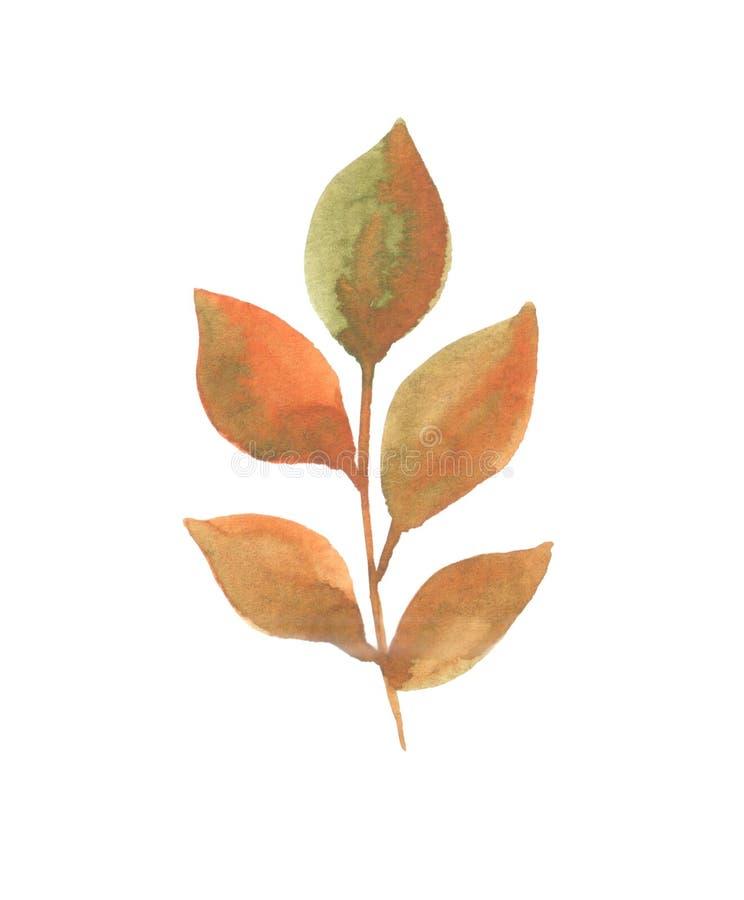 Ilustração da aquarela de um galho com as folhas no outono ilustração royalty free