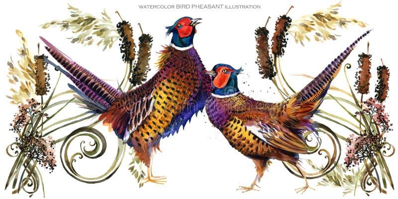 Ilustração da aquarela do faisão do pássaro ilustração royalty free