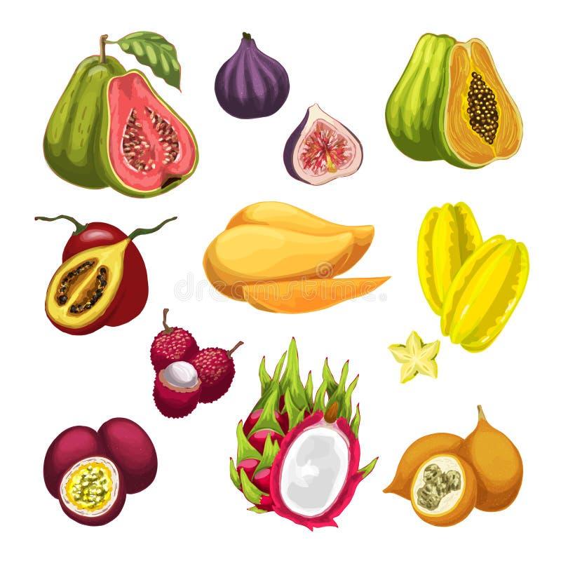 Ilustração da aquarela do fruto exótico e tropical ilustração do vetor