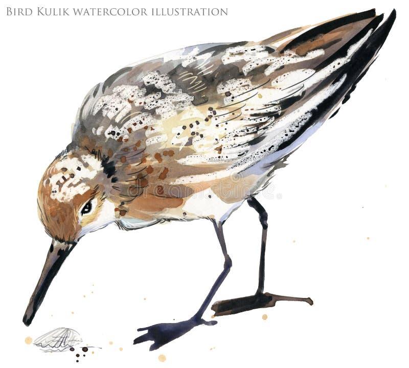 Ilustração da aquarela do pássaro de água do borrelho ilustração royalty free
