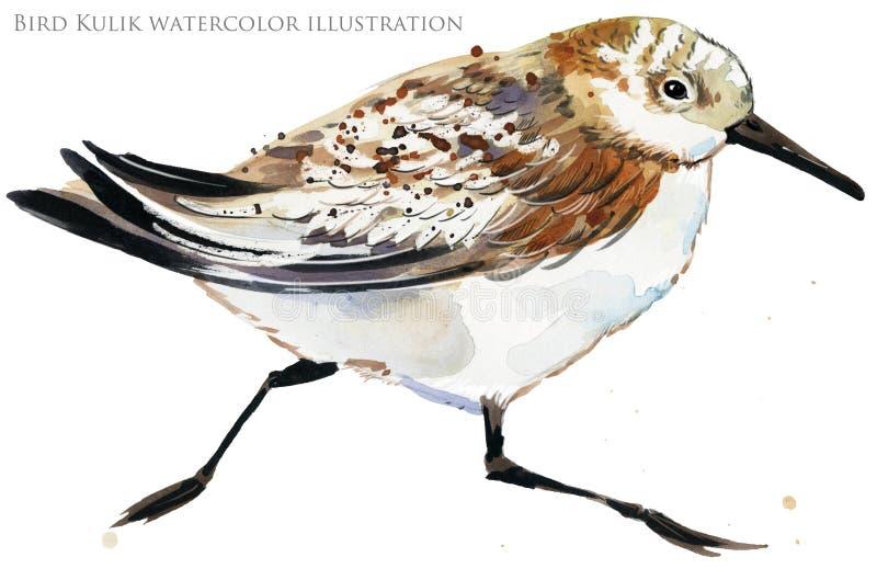 Ilustração da aquarela do pássaro de água do borrelho ilustração do vetor