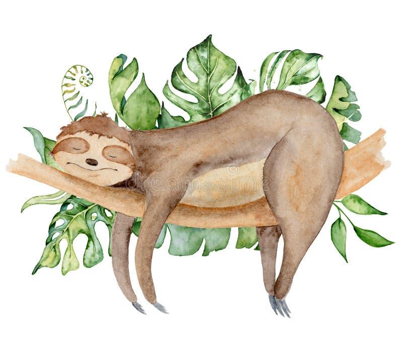 Ilustração da aquarela do urso de preguiça com as folhas tropicais que dormem em um ramo ilustração stock