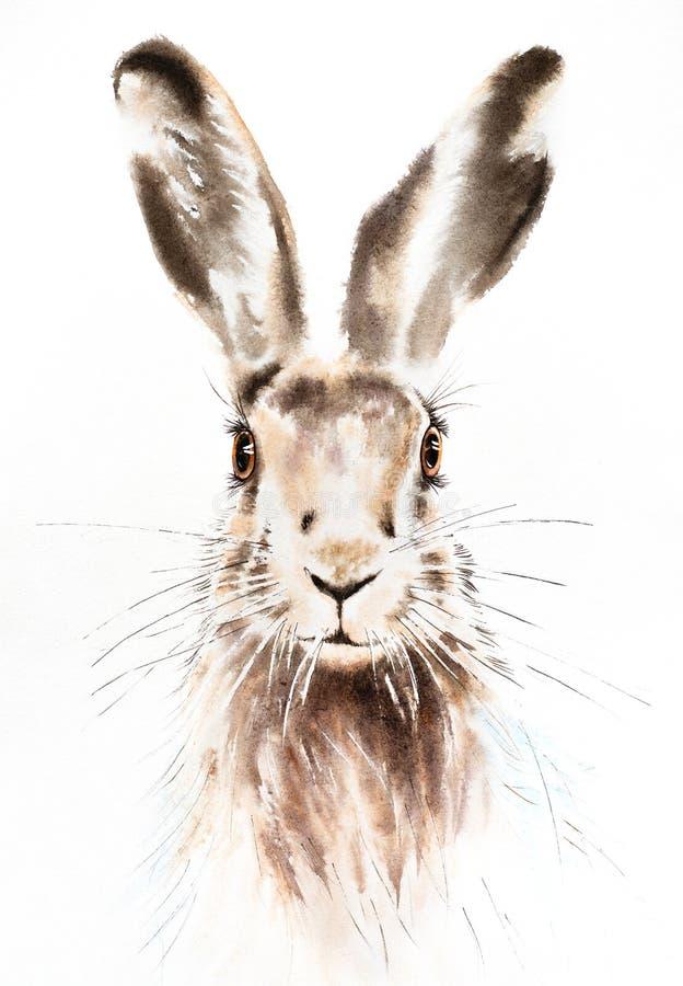 A ilustração da aquarela dos coelhinhos da Páscoa, retrato do coelho isolou-se ilustração royalty free