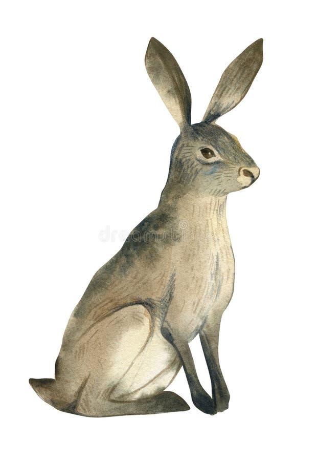 Ilustração da aquarela da lebre marrom no fundo branco Esboço animal da floresta realística ilustração royalty free