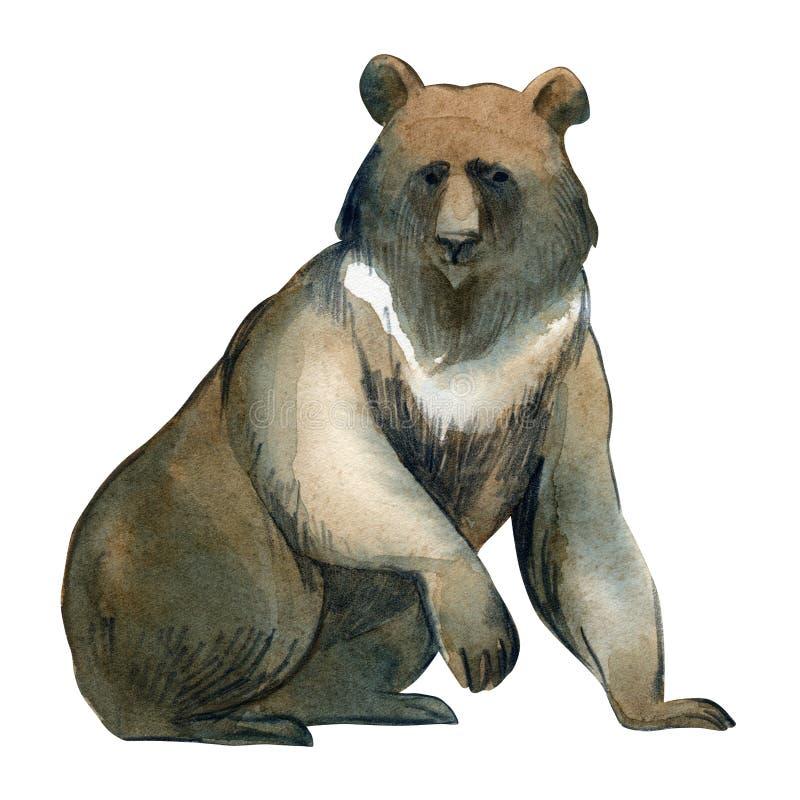 Ilustração da aquarela no fundo branco Urso enorme de Brown Esboço simples de animais selvagens da floresta ilustração do vetor