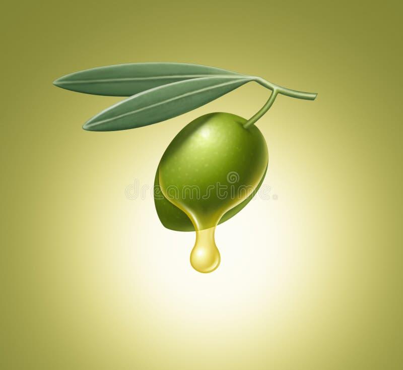 Ilustração da azeitona verde e das folhas ilustração do vetor