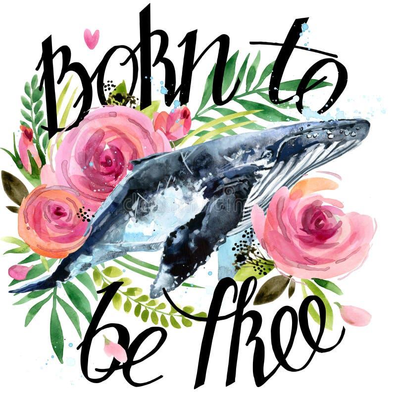 Ilustração da baleia da aquarela Fundo das rosas do vintage Carregado estar livre ilustração royalty free