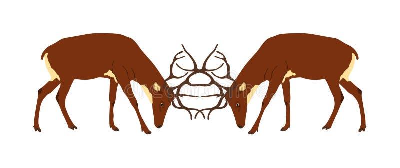 Ilustração da batalha dos cervos isolada no fundo branco Veados vermelhos que lutam pela fêmea Esforço na floresta ilustração royalty free