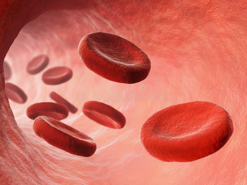 Ilustração da circulação sanguínea ilustração royalty free