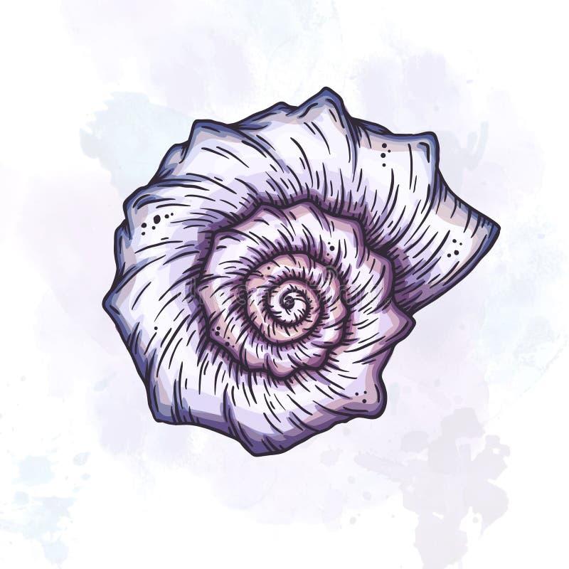 Ilustração da concha do mar dos desenhos animados ilustração stock