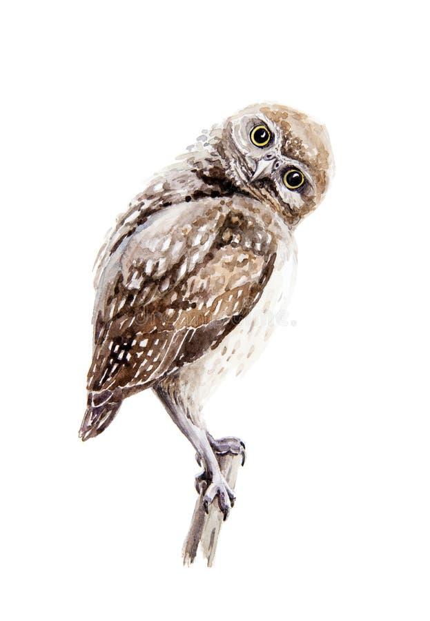 Ilustração da coruja do marrom da aquarela Esboço selvagem pequeno do pássaro da natureza que senta-se em um ramo Isolado no fund ilustração stock