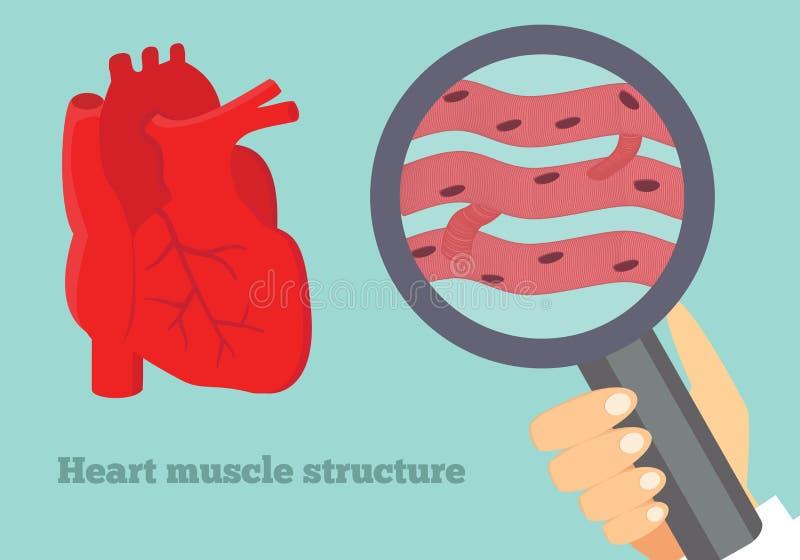 Ilustração da estrutura do músculo de coração Ilustração do tecido cardíaco ilustração do vetor