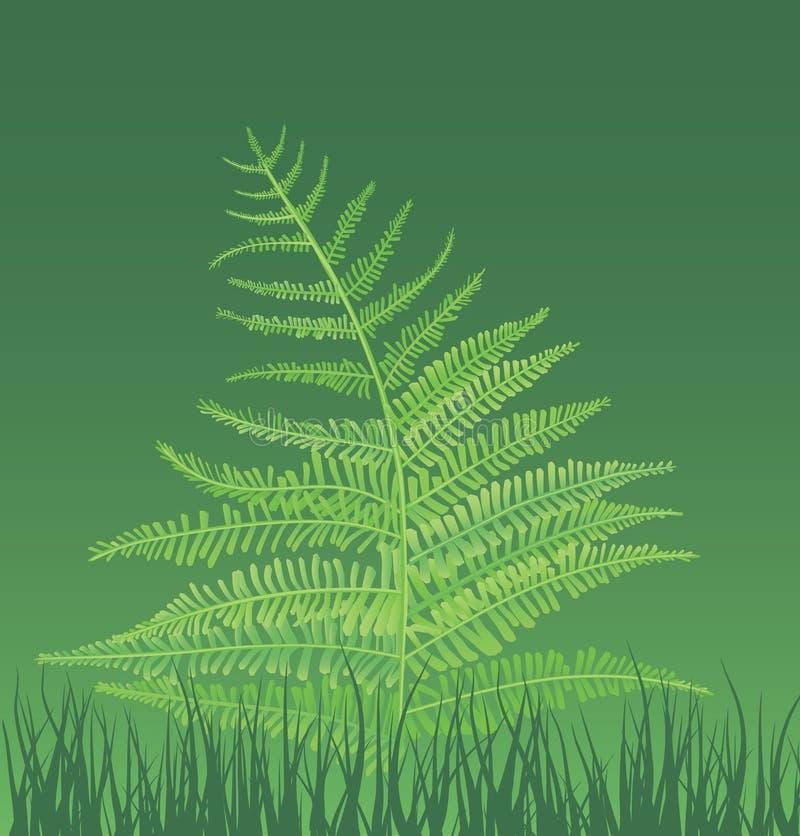 ilustração da fern-planta ilustração royalty free