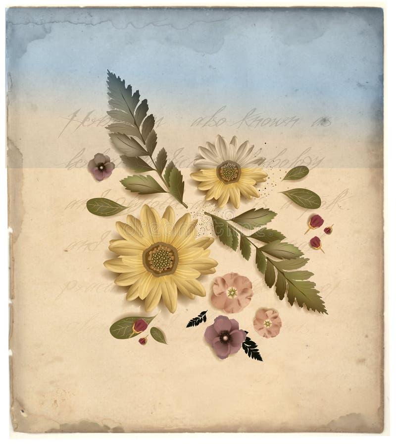 Ilustração da flor do vintage ilustração do vetor