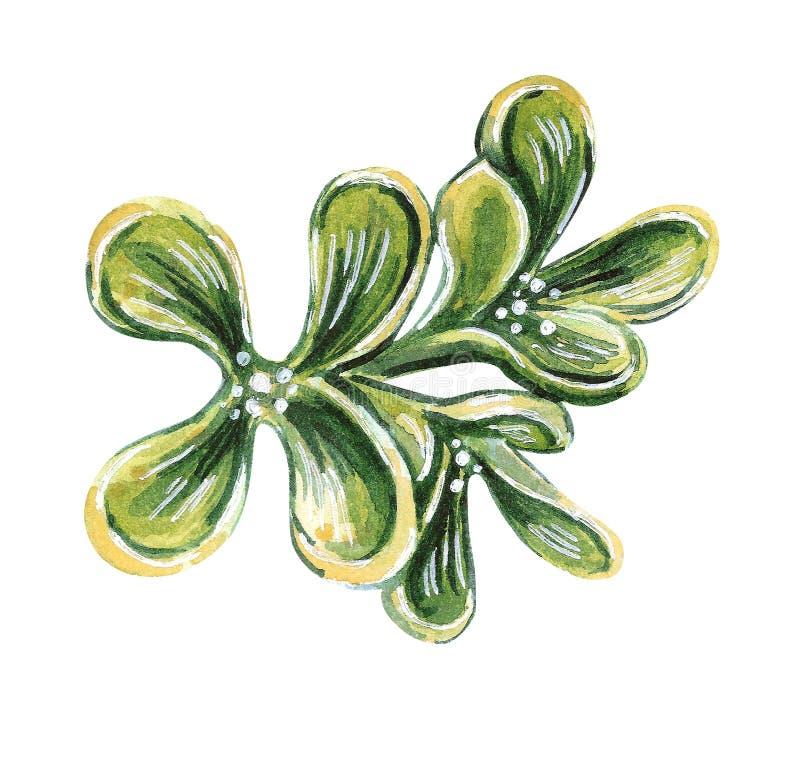 Ilustração da forma da aquarela de um  h do brooÑ na cor de verde azeitona ilustração royalty free