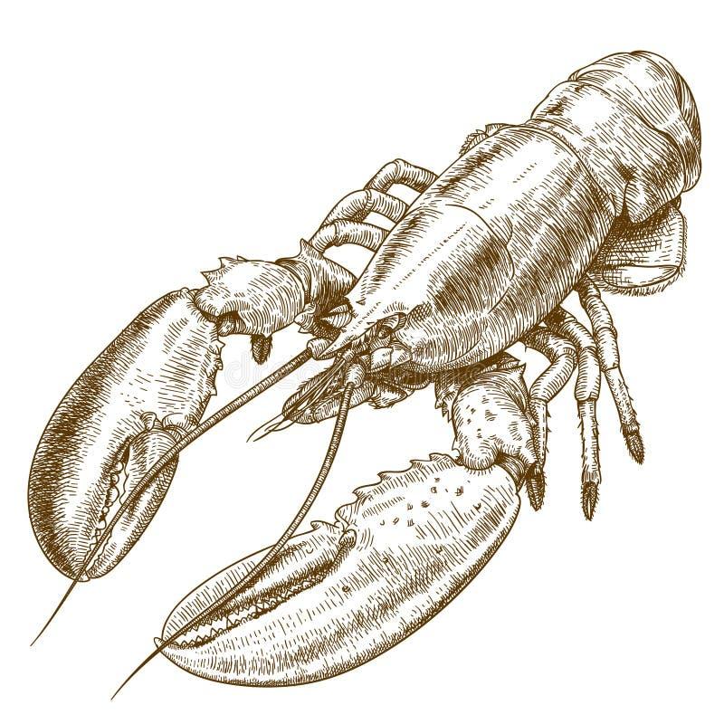 Ilustração da gravura da lagosta ilustração do vetor
