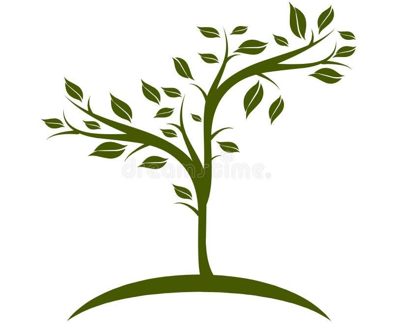 Ilustração da oliveira perfeita para o tipo e a propaganda fotografia de stock