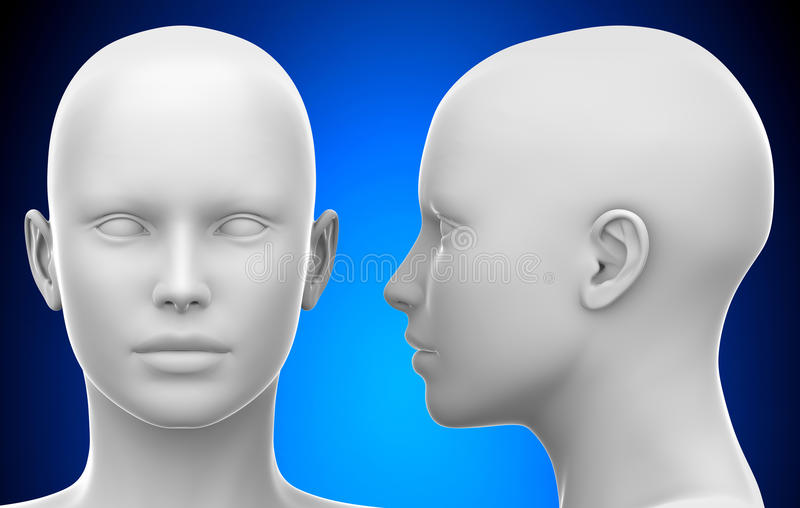 Ilustração da opinião lateral e dianteira 3D da cabeça fêmea branca vazia - ilustração royalty free