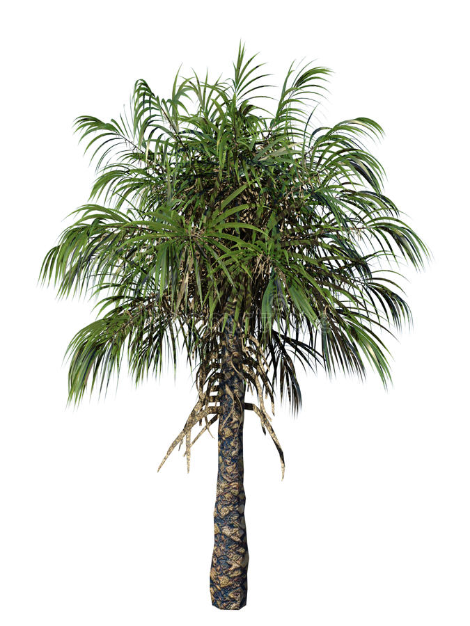 Ilustração da palmeira ilustração do vetor