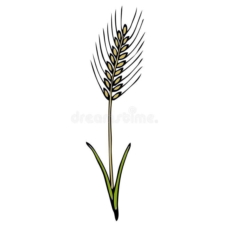 Ilustração da planta do trigo fotografia de stock