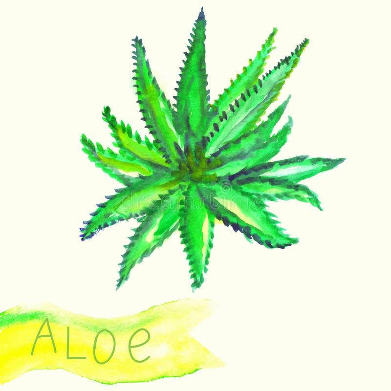 Ilustração da planta pintada aquarela do aloés com ilustração stock