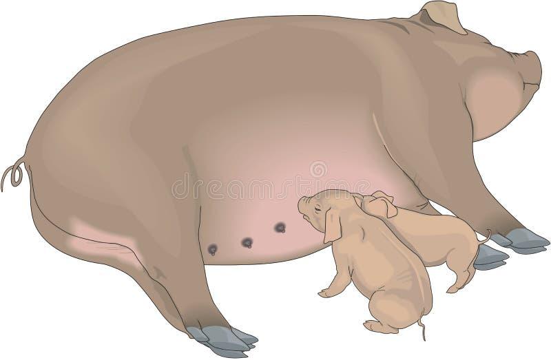 Ilustração da porca e dos leitão ilustração stock