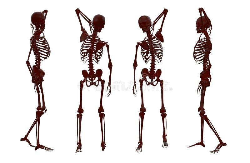 ilustração da rendição 3D do esqueleto ilustração stock