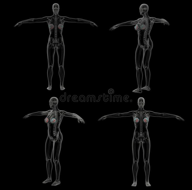 ilustração da rendição 3d da glândula mamário humana ilustração royalty free