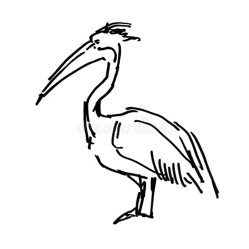 Ilustração da tinta do esboço do pelicano no fundo branco ilustração stock