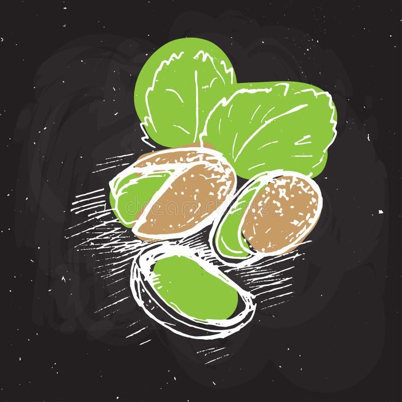 Ilustração da tração da mão do vetor do pistache Pistache esboçado na placa de giz preta pistache com folhas e textura ilustração royalty free
