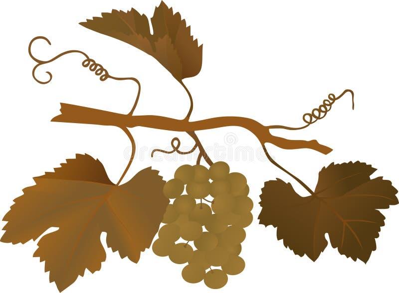 Ilustração da uva de Brown ilustração do vetor