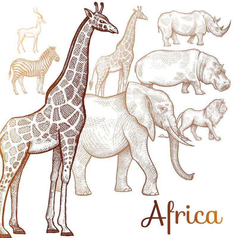 Ilustração de animais africanos ilustração do vetor