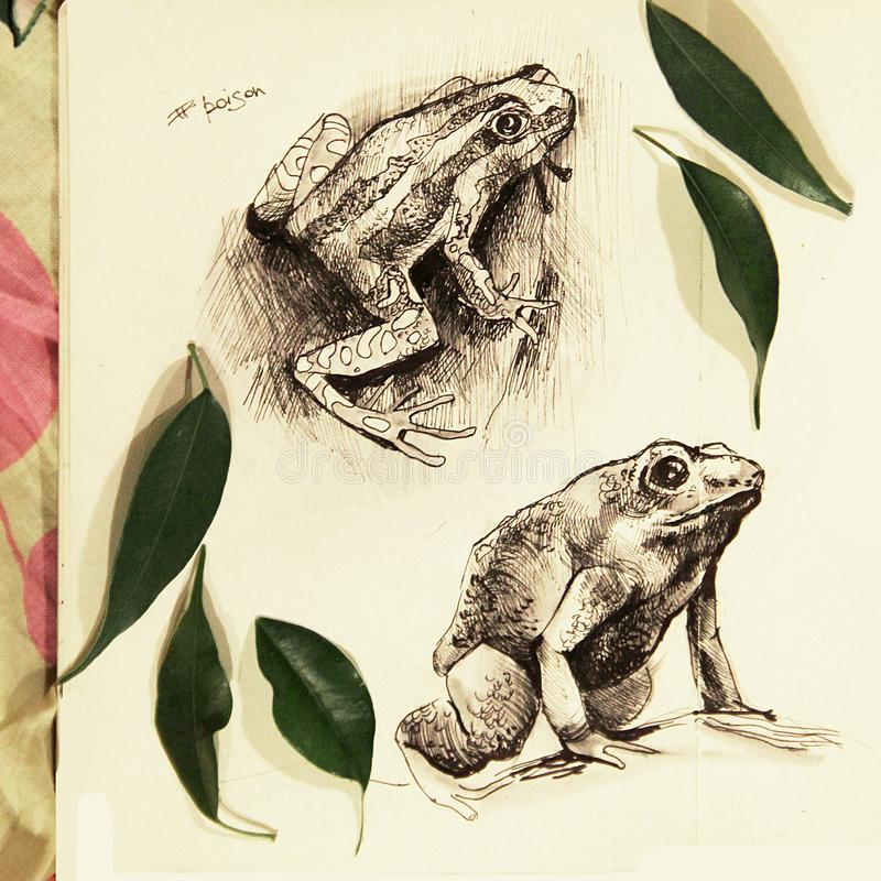 Ilustração de duas rãs tiradas no lápis ilustração do vetor