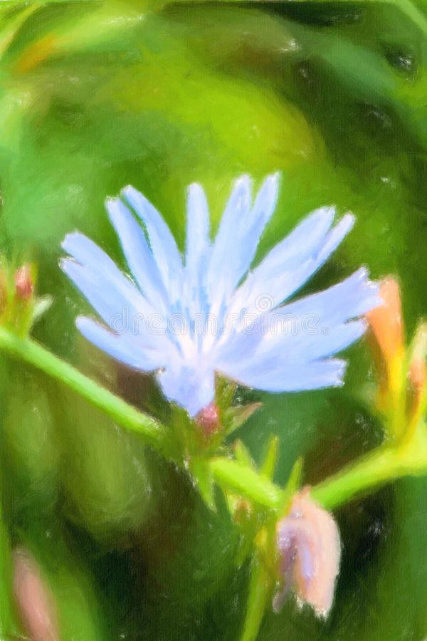 Ilustração de flores da chicória no fundo verde foto de stock royalty free