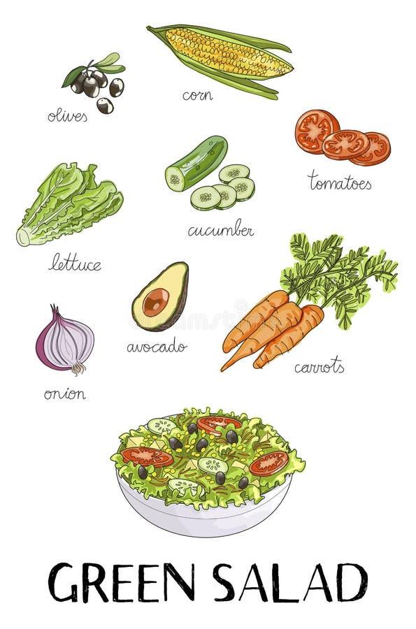 Ilustração de ingredientes tirados mão da salada verde ilustração do vetor