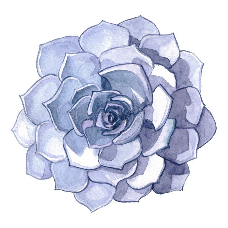 Ilustração de pedra suculento da aquarela da flor fotografia de stock royalty free