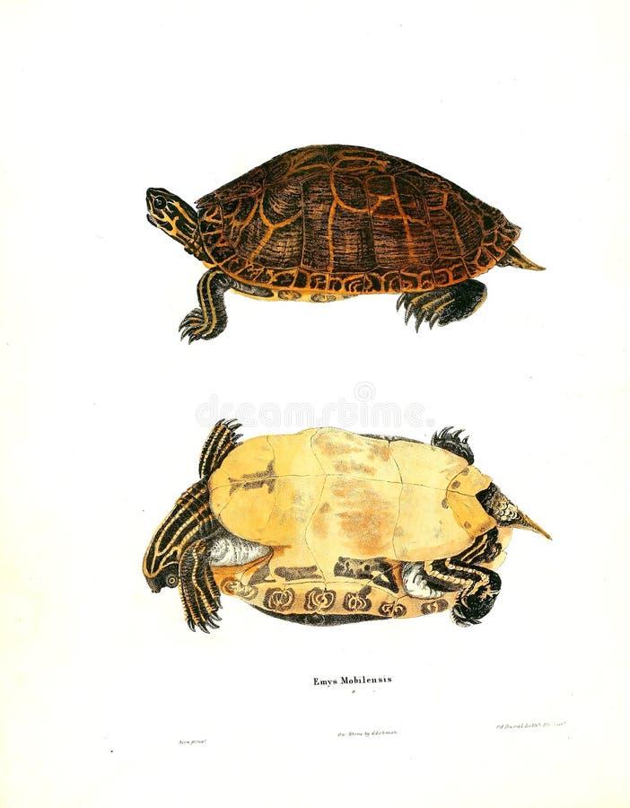 Ilustração de um animal foto de stock